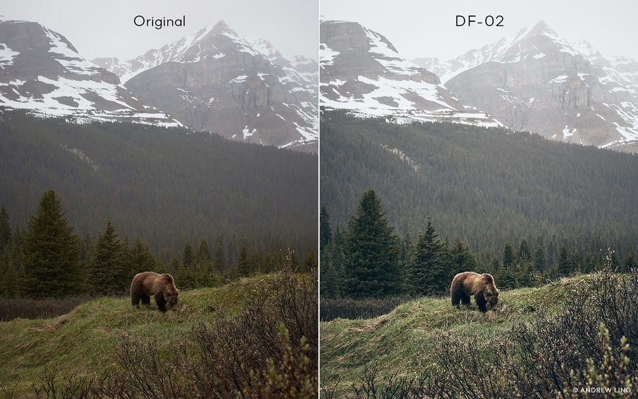 Capture One Raw Photo Editor Buy Style Latitude Deep Forest Df02