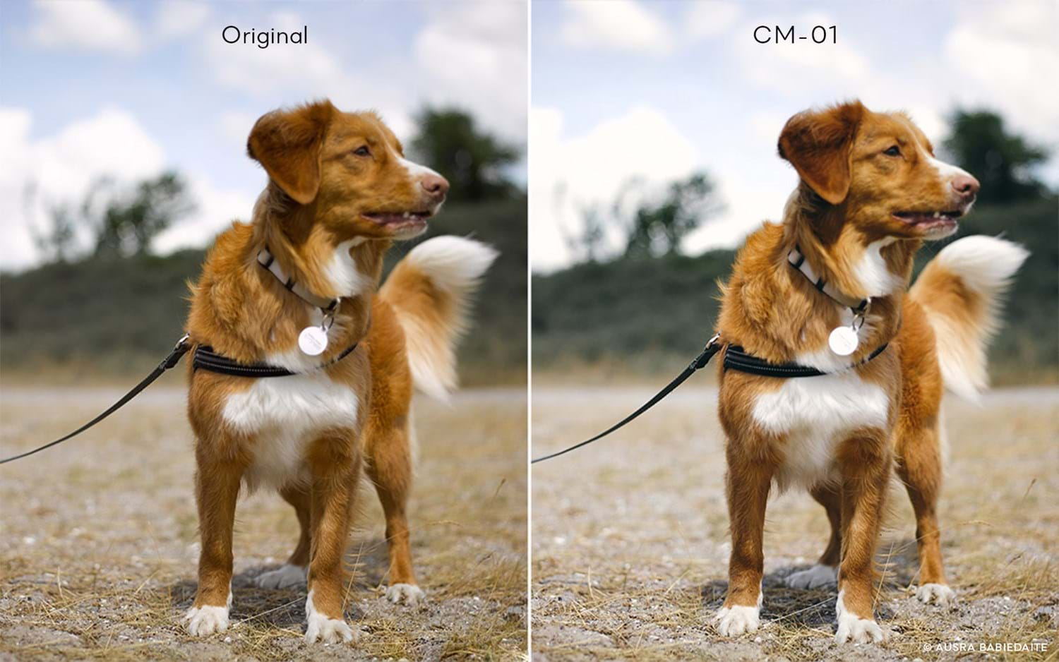 Capture One Raw Photo Editor Buy Style Cinematic Styles Cm01